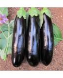 Doğal Patlıcan Tohumu