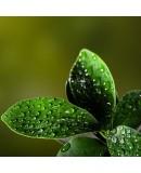 Yaprak Gübreleri