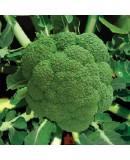 Hibrit Brokoli Tohumu