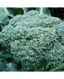 Hobi Brokoli Tohumu