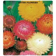Aster Çiçeği Tohumu