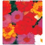 İpek Çiçeği (Şellaki) Tohumu