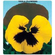 Sarı Hercai Menekşe Çiçeği Tohumu