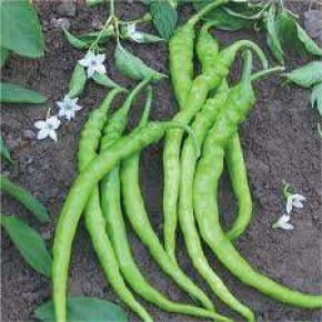Doğal Acı Sivri Biber Tohumu - 10 gr