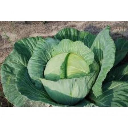 Doğal Beyaz Lahana Tohumu - 10 gr