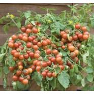 Doğal Domates Tohumu Cherry - 25 Adet
