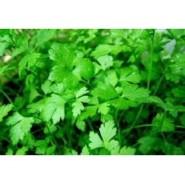 Doğal İnce Yapraklı Maydonoz Tohumu - 10 gr