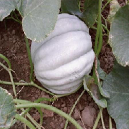 Doğal Kestane Balkabağı Tohumu - 1 kg