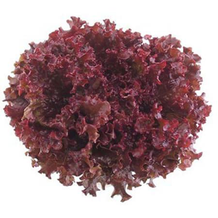Doğal Kırmızı Kıvırcık Marul Tohumu - 5 gr