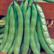 Doğal Sakız Bakla Tohumu - 10 gr