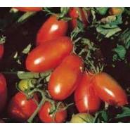 Doğal Salçalık Domates Tohumu - 100 gr