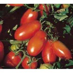 Doğal Salçalık Domates Tohumu - 10 gr