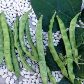 Doğal Şeker Fasulye Tohumu - 10 gr