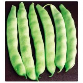 Doğal Sırık Öz Ayşe Fasulye Tohumu - 10 gr
