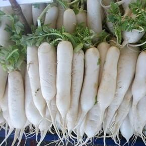 Doğal Uzun Beyaz Turp Tohumu - 10 gr
