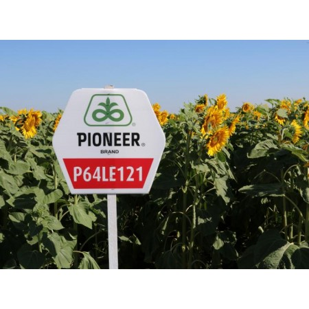 Hibrit Ayçiçeği Tohumu - Pioneer P64LE121 - 10 Kg