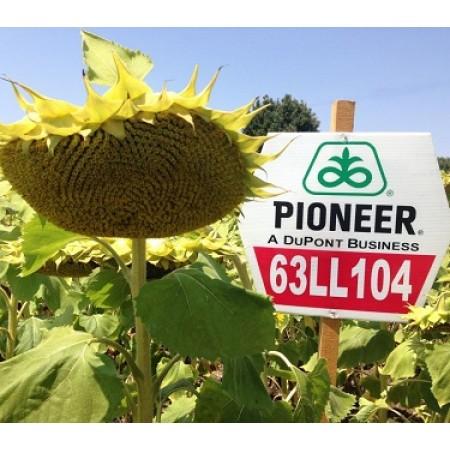 Hibrit Ayçiçeği Tohumu - Pioneer P63LL104 - 10 Kg
