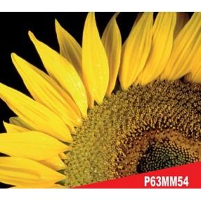 Hibrit Ayçiçeği Tohumu - Pioneer P63MM54 - 10 Kg
