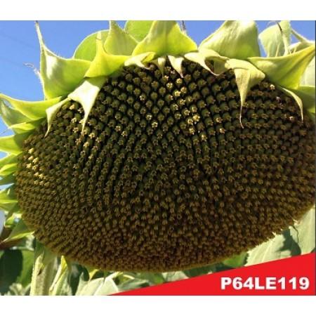Hibrit Ayçiçeği Tohumu - Pioneer P64LE119 - 10 Kg