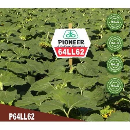 Hibrit Ayçiçeği Tohumu - Pioneer P64LL62 - 10 Kg