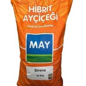 Hibrit Ayçiçeği Tohumu Yağlık - Sirena - 10 Kg