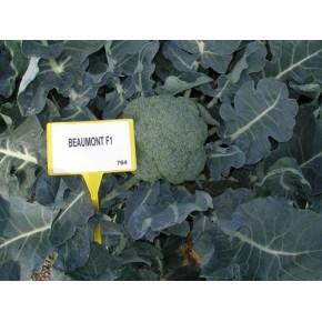 Hibrit Brokoli Tohumu F1 (Kışlık - Sofralık) Çeşit 2 - 2.500 Adet Tohum
