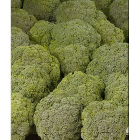 Hibrit Brokoli Tohumu F1 (Erkenci- Sofralık) Çeşit 3 - 2.500 Adet Tohum