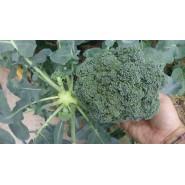 Hibrit Brokoli Tohumu - Pamidi F1 - 1.000 Adet Tohum