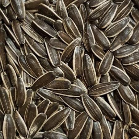 Hibrit Çerezlik Ayçiçeği Tohumu - 10 Kg ( Çin Tipi ) - NT-361