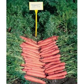 Hibrit Havuç Tohumu F1 (Kışlık - Sofralık) Çeşit 4 - 250.000 Adet Tohum