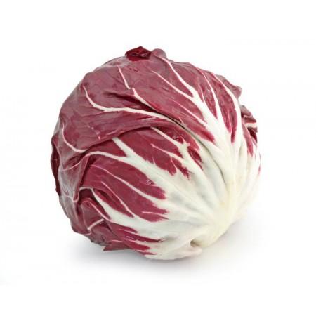 Hibrit Hindiba (Radicchio rosso) Tohumu F1 (Yuvarlak - Kırmızı - Beyaz) Çeşit 8 - 5.000 Adet Tohum