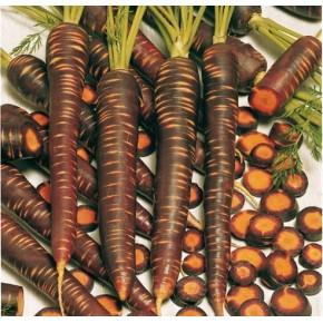 Hibrit Havuç Tohumu F1 (Mor renkli - İçi portakal) - 250.000 Adet Tohum