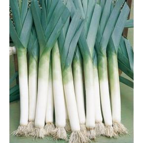 Hibrit Pırasa Tohumu F1 (Uzun bacak - İnce) - 10.000 Adet Tohum