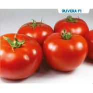 Hibrit Yarı Sırık Domates Tohumu - Olivera F1  - 1.000 Adet