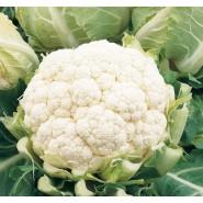 Hibrit Karnıbahar Tohumu F1 (Kışlık) Çeşit 1 - 2.500 Adet Tohum