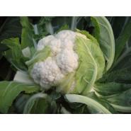 Hibrit Karnıbahar Tohumu F1(Yazlık) Çeşit 3 - 2.500 Adet Tohum