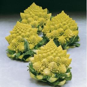 Hibrit Karnabahar Tohumu F1 (Yeşil - Piramid) - 2.500 Adet Tohum