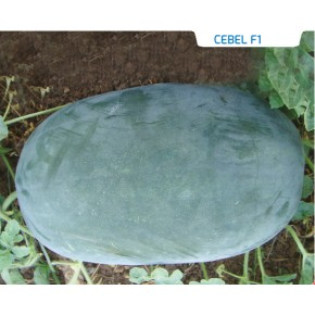 Hibrit Siyah Karpuz Tohumu - Cebel F1 - 1.000 Adet Tohum