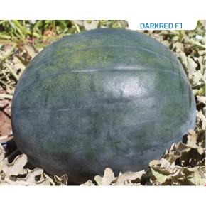 Hibrit Siyah Karpuz Tohumu - Darkred F1 - 1.000 Adet Tohum