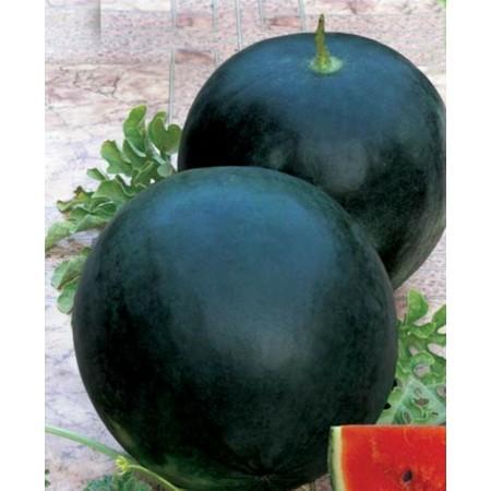 Hibrit Siyah Karpuz Tohumu - Panja F1 - 500 Adet Tohum