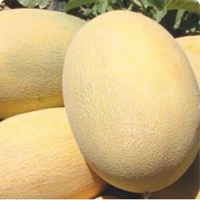 Hibrit Ananas Kavun Tohumu - A-Z 90 F1 - 1.000 Adet Tohum