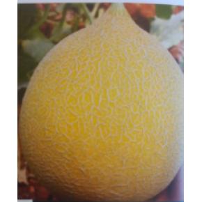 Hibrit Kavun Tohumu -  Galia 1301 F1 - 1.000 Adet Tohum