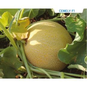 Hibrit Ananas Kavun Tohumu-Cemely F1-1.000