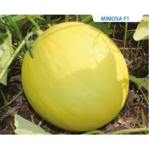 Hibrit Kavun Tohumu - Mimosa F1 - 1.000 Adet
