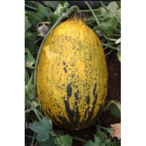 Hibrit Kırkağaç Kavun Tohumu - 1212 F 1