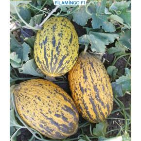 Hibrit Kırkağaç Kavun Tohumu - Filamingo F1 - 1.000 Adet Tohum