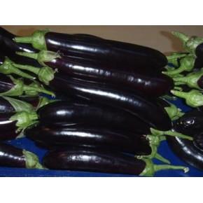 Hibrit Patlıcan Tohumu - F1 (Siyah - Açık Tarla ) - 500 Adet Tohum