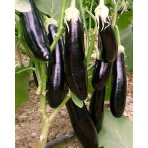 Hibrit Uzun Patlıcan Fidesi NT-1683 F1 - 216 Adet