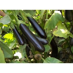 Hibrit Uzun Patlıcan Fidesi NT-1695 F1 - 216 Adet