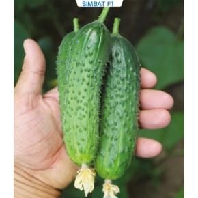 Hibrit Kornişon Salatalık Tohumu - Simbat F1 - 1.000 Adet Tohum